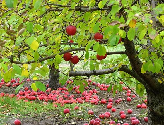Fa és gyümölcsök