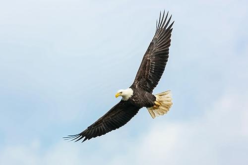 """""""Akik az Úrban bíznak, erejük megújul, szárnyra kelnek, mint a sasok"""" (Ézs 40, 31)"""